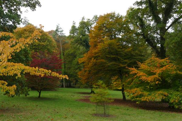 Autumn colours on the trees at West Dean Gardens