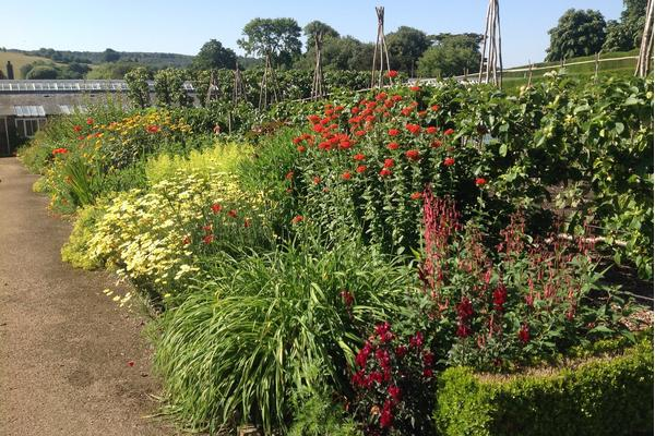Hot borders in the Kitchen Garden at West Dean in West Sussex