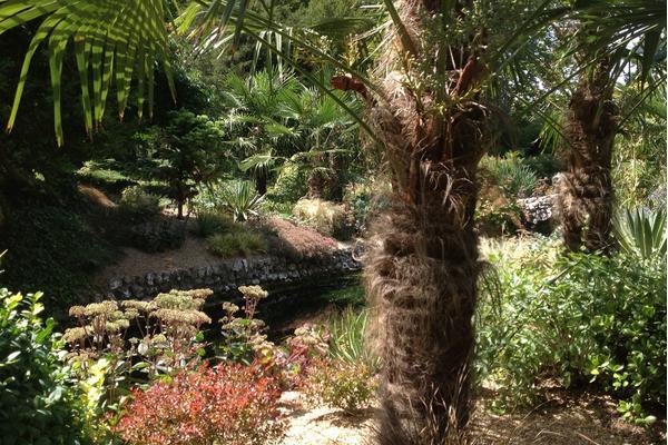 River Lavant in the West Dean Spring Garden