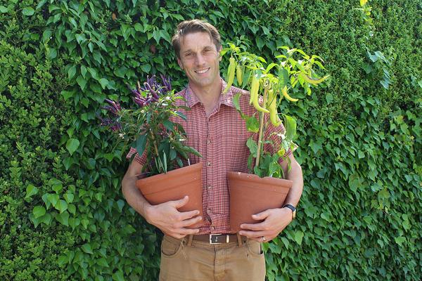 Head Gardener Tom Brown holding chillies at West Dean Gardens