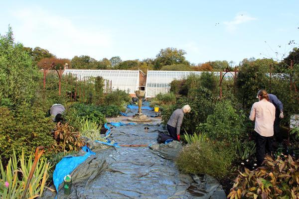 Gardening team planting the rose border