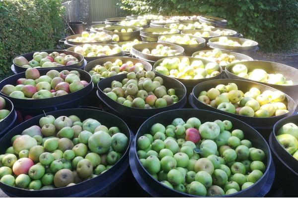 Apples off to HFT