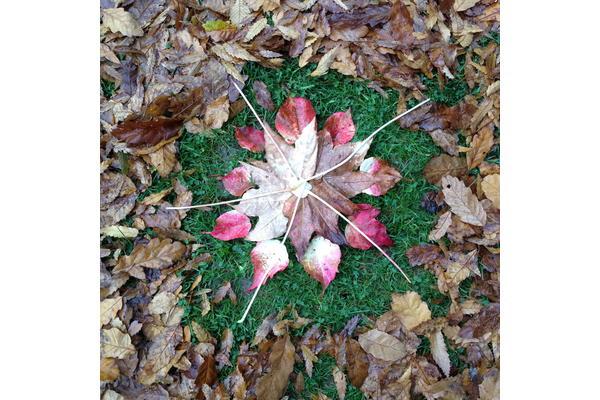 Leaf_Mandala_13_Dan_Lobb