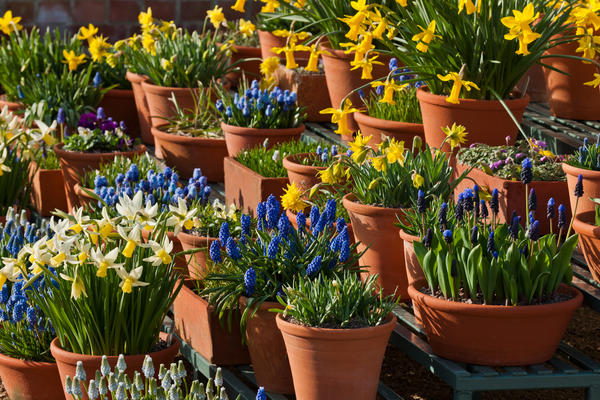 Spring Bulbs at West Dean Gardens