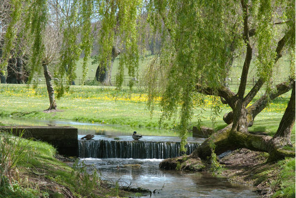 The River Lavant