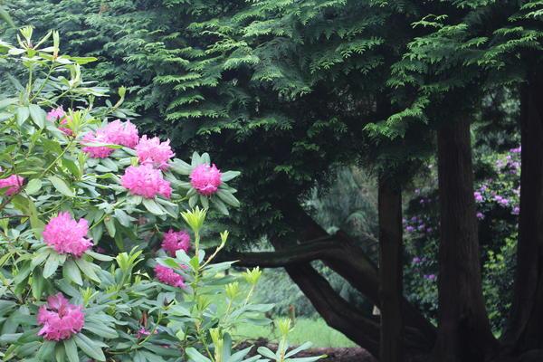 St.Roche's Arboretum, West Dean Gardens