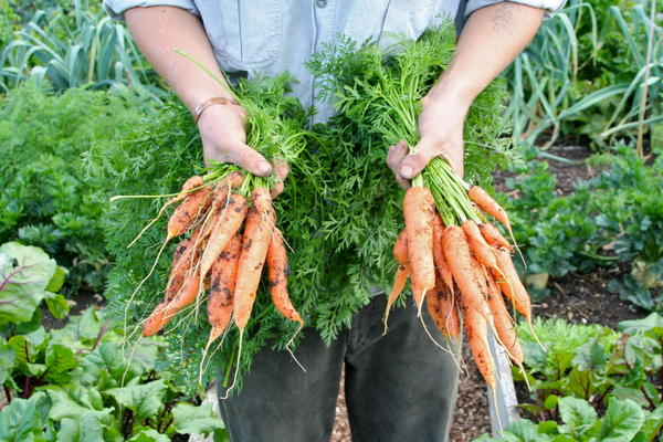 Charles Dowding - Easier ways to a successful vegetable and fruit garden
