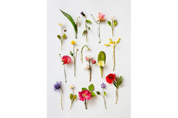 Millinery silk flowers – making spring flowers with Anne Tomlin, 21 to 24 March 2022