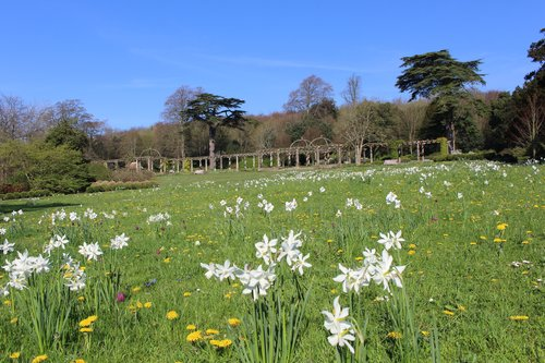 Daffodils at West Dean Gardens in April