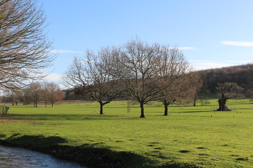 West Dean Gardens Arboretum View