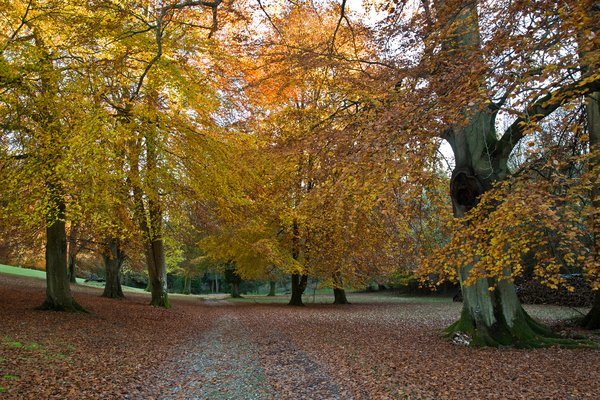 Autumn leaves in the Arboretum at West Dean Gardens