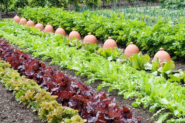 Kitchen Garden at West Dean Gardens Credit Trevor Sims