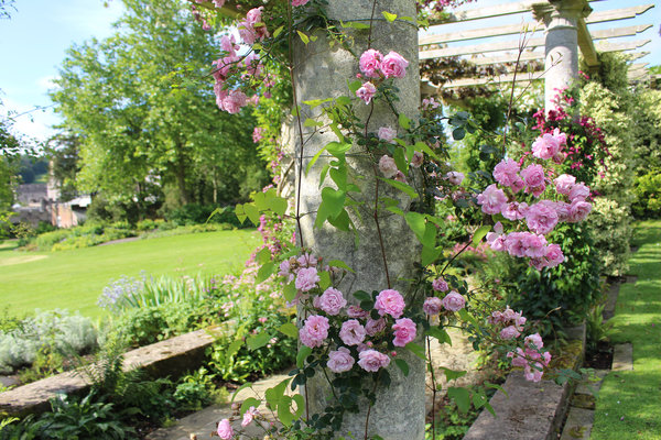 Roses on the pergola at West Dean Gardens near Chichester