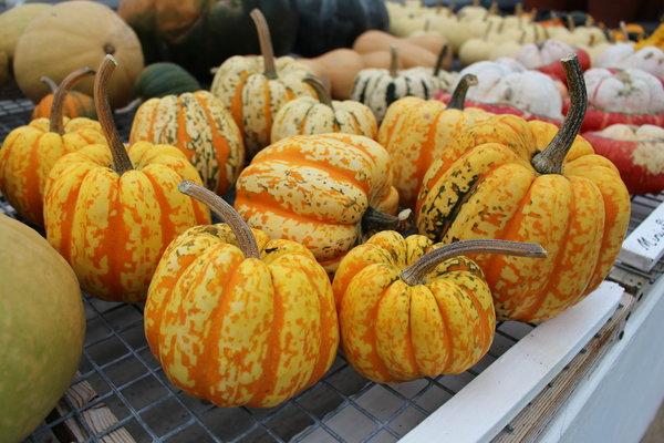 Autumn gourds at West Dean Gardens