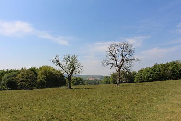 West Dean Arboretum in Spring