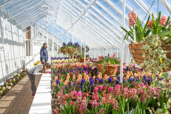Visitors admiring the hyacinths in the glasshouses