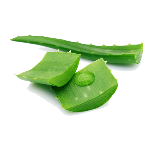 Fresh Vegetables Aloe Vera Leaf