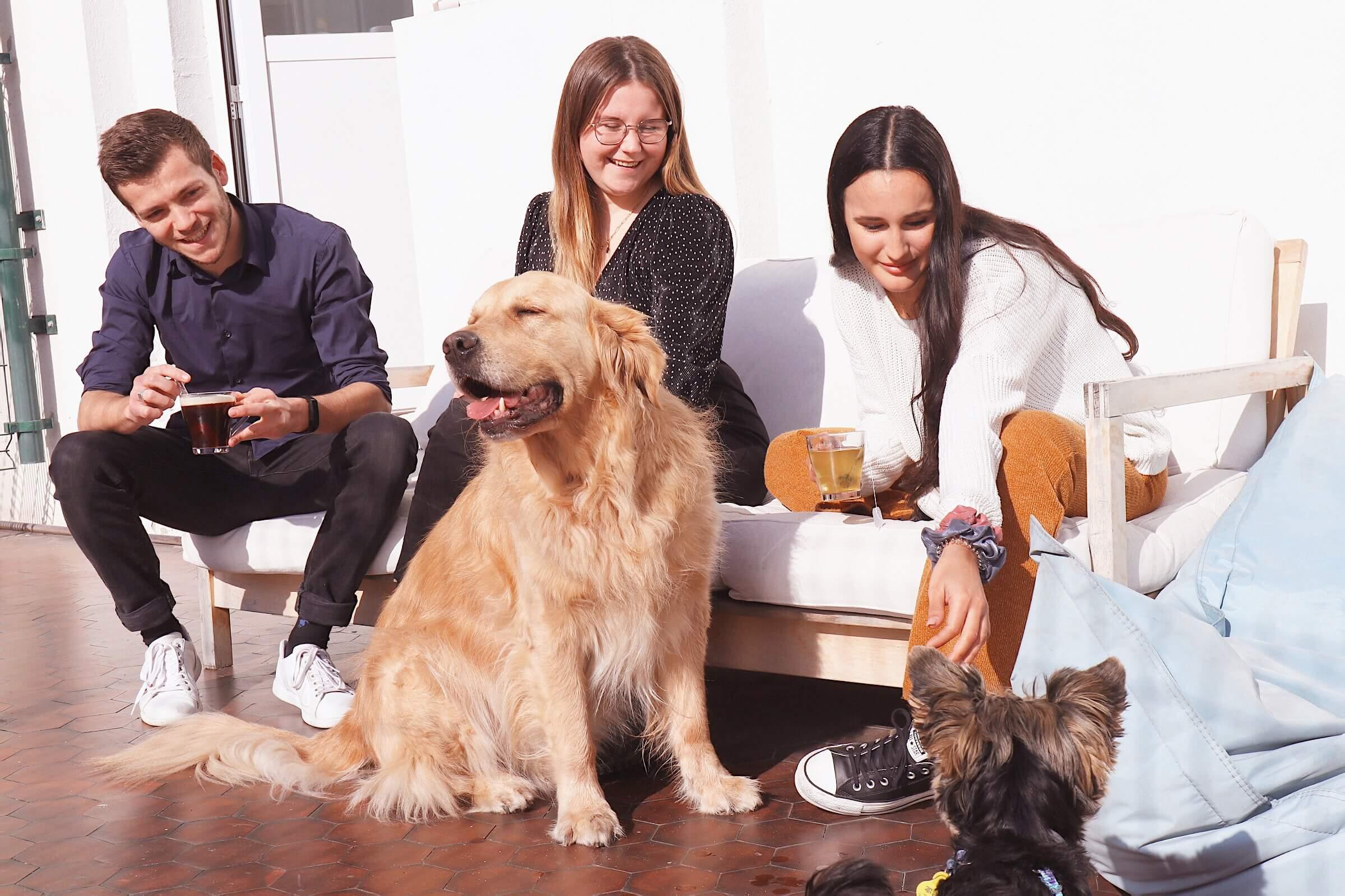 Hector-Kitchen-Dog